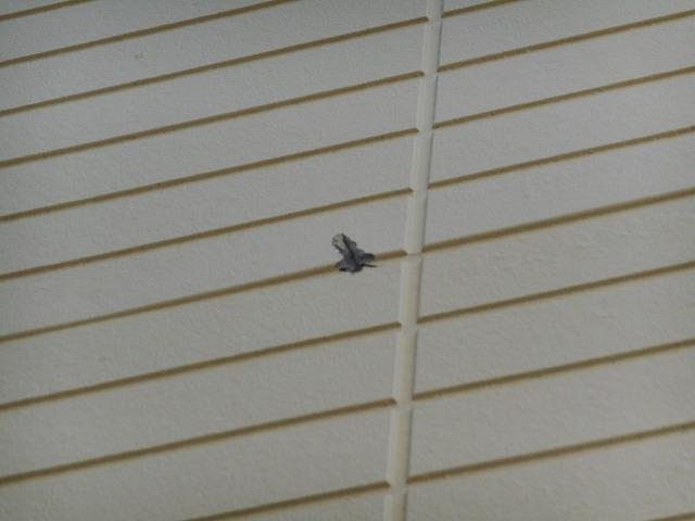 横浜市南区のお客様塗装前損傷箇所確認7箇所目